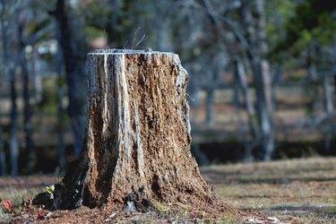 Rotten Stump