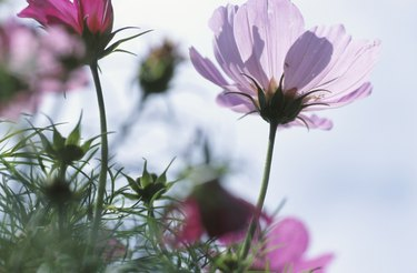 Pink flowers in a field