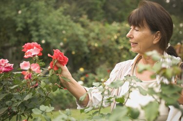 Senior Hispanic woman looking at rose