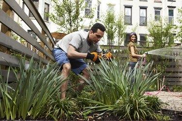Gardening in urban backyard