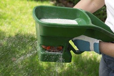 Fertilizing Lawn