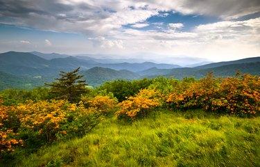 Flame Azalea Blooms Blue Ridge Mountains Roan Highlands State Park