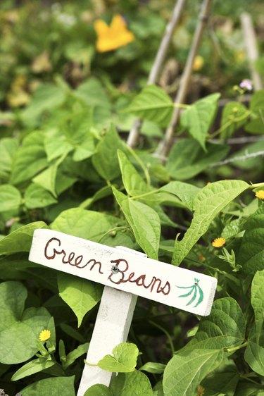 Green beans sign in garden