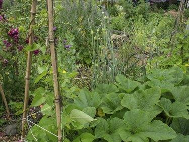 Seattle P-Patch Community Garden