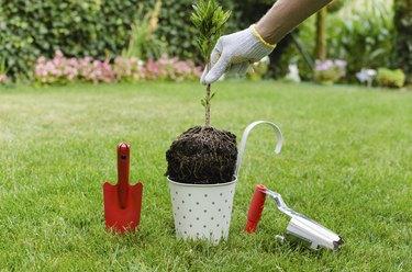 Planting tree in blooming garden
