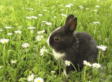 Rabbit bunny black and white