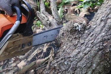 The saw cutting the wood