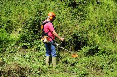 Cutting back the bush