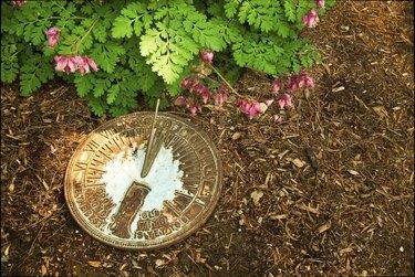 Sundial on Bark Mulch Next to Bleeding Hearts