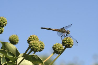 Dragonfly up in a Tree