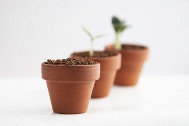Growth concept. Terracotta pots