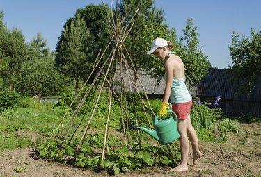 girl garden watering can stick tower  beans