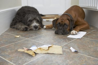 Two dogs in hallway, one with paw on letter