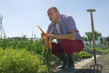 Man holding carrots