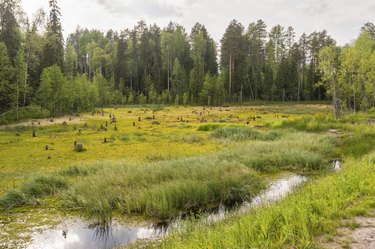 Bog landscape with open water plot against forest background.
