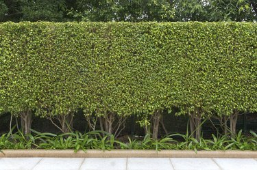 Green leaves wall
