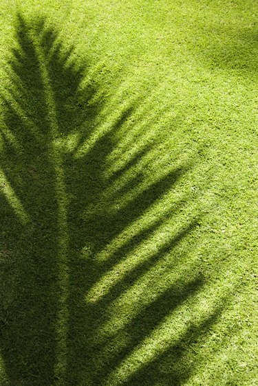 Shadow of palm leaf on grass