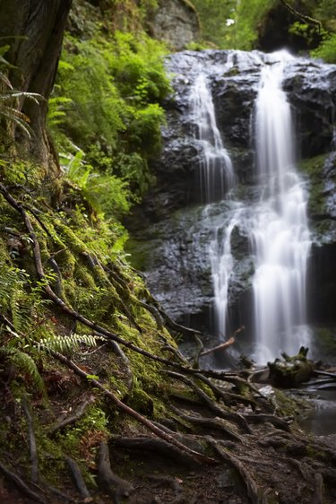 Waterfall in forest, tree roots in foreground