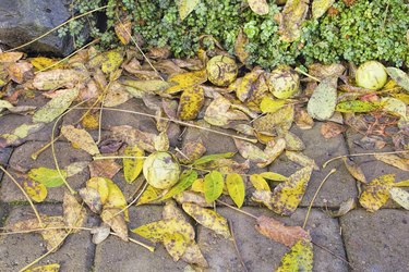 Pavers covered with fallen leaves and fruits