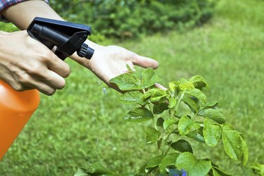 Woman gardening and spraying a flower