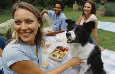 two young couples enjoying a picnic on the grass with their dog