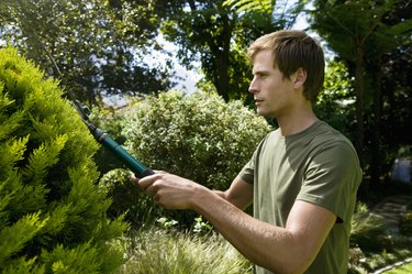 Man trimming a bush