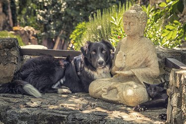 Collie dog and cat resting on a Buddha statue