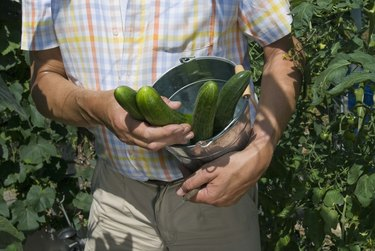 Person holding cucumbers