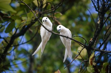 White birds in tree