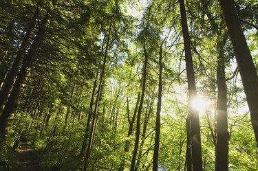 Sunburst in woods