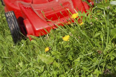 green grass and red lawn mower