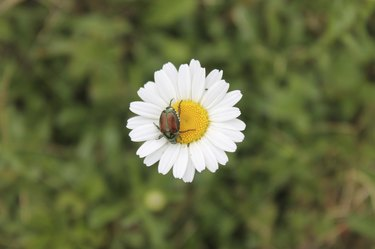 Daisy with visitor