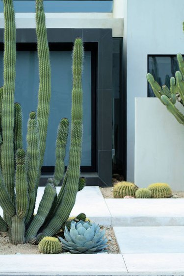 cactus desert landscape