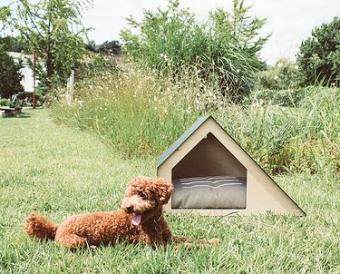 minimalistic dog house