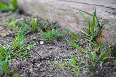 grass near fence
