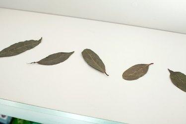 Bay leaves in a pantry shelf.