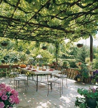 Vine covered trellis covered patio