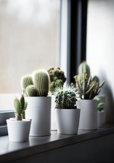modern style home windowsill white potted succulents