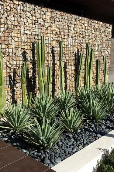 desert plants for landscaping curve leaf yucca