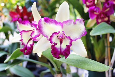 Orchids in bloom.