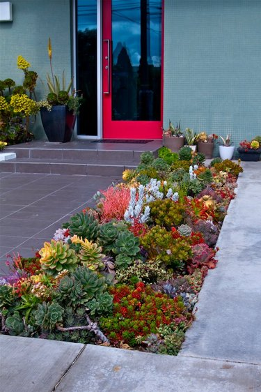 Patch of desert greenery featuring red flowers to match door