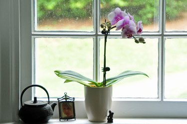 Potted orchid on window sill...