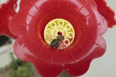 Bee grate.