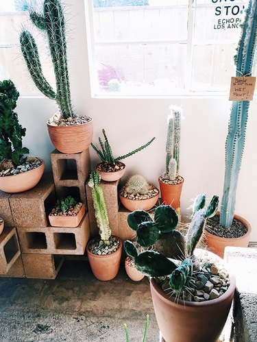 cinderblock cacti display