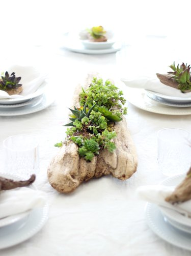 Succulent driftwood planter centerpiece on a table