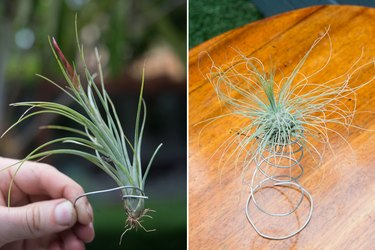 Aluminum wire to mount your airplants.