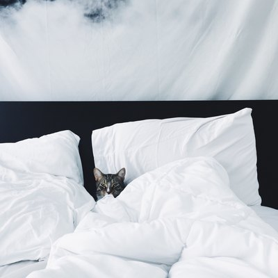 cozy bed with cat