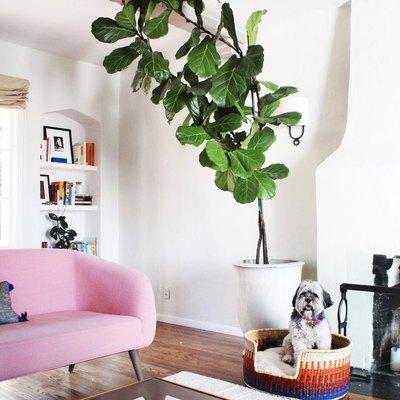 design dua dog bed