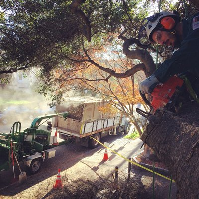Tree removal professional.