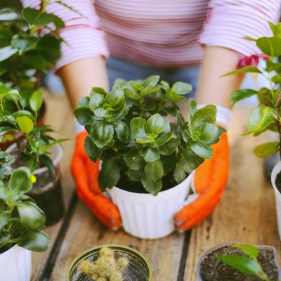 Spring Cleaning Can Wait: Now's the Perfect Time to Set Up Your Home Garden